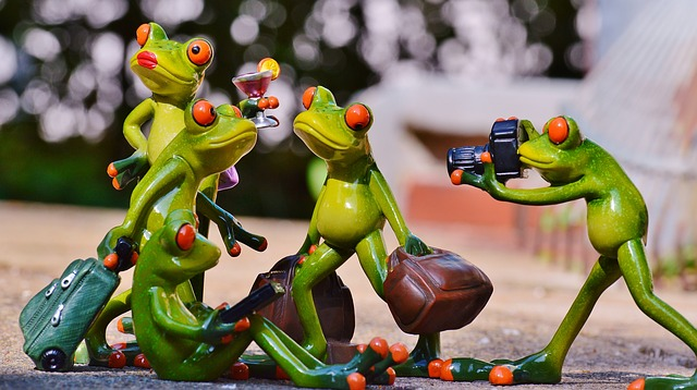 frogs-897981_640
